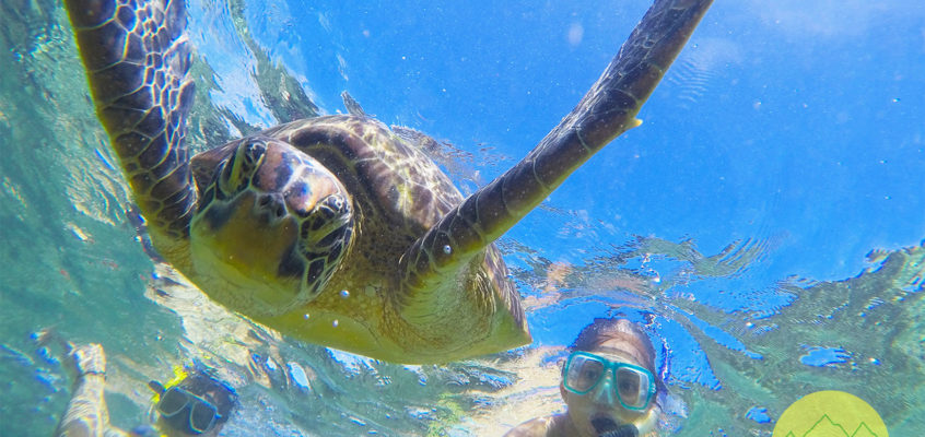 Two Days on Apo Island: Tips, Itinerary, Budget and Things to Do