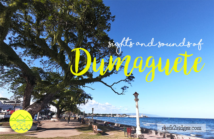 DIY Adventures: A Guide to the Sights and Sounds of Dumaguete